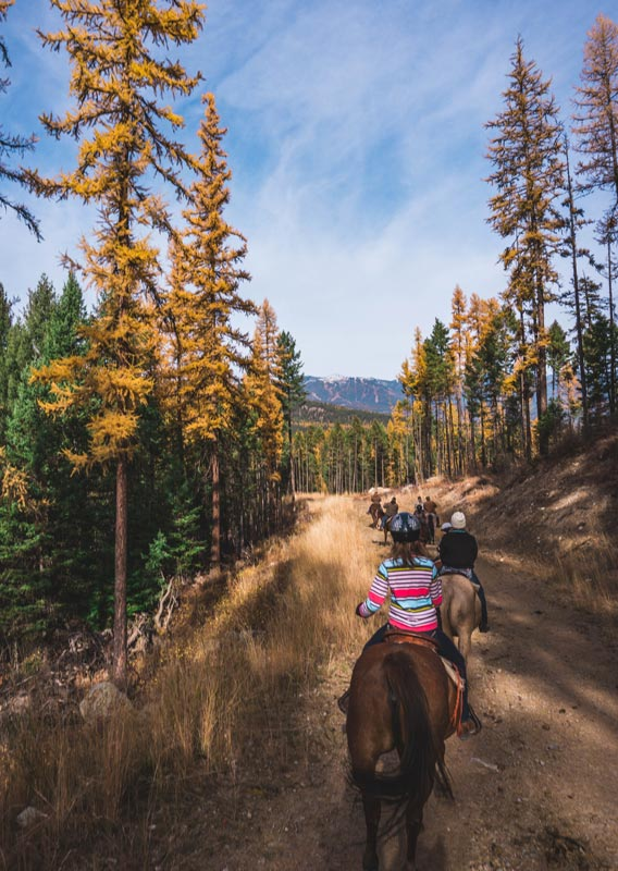 Six horseback riders on a trail among green and yellow trees