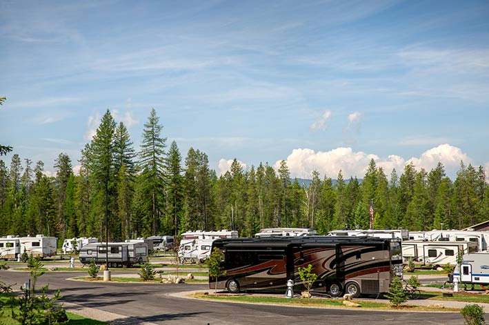 RVs fill grassy sites along park roads with a wall of tall trees behind them