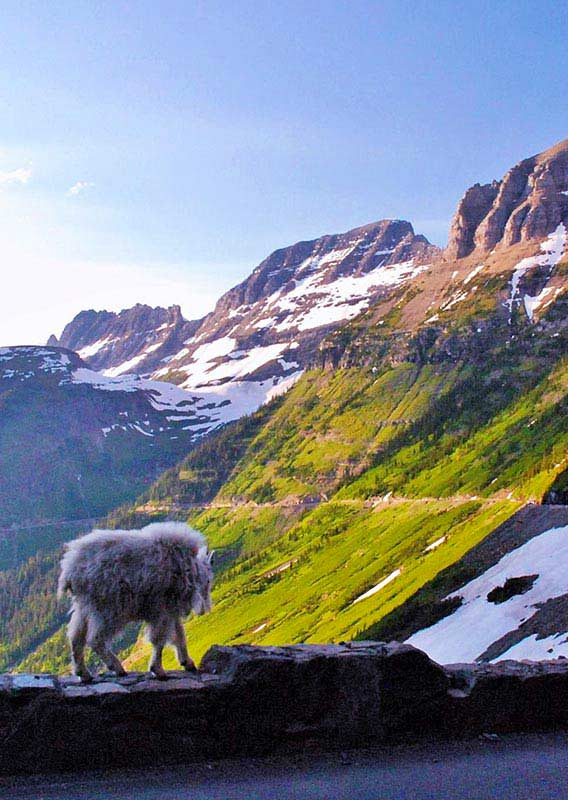 tour the stunning going to the sun road in glacier park montana