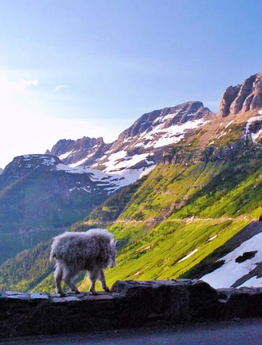 6 Top Travel Tips for the Going-to-the-Sun Road