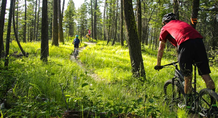 Three cyclists ride among trees and green grass.