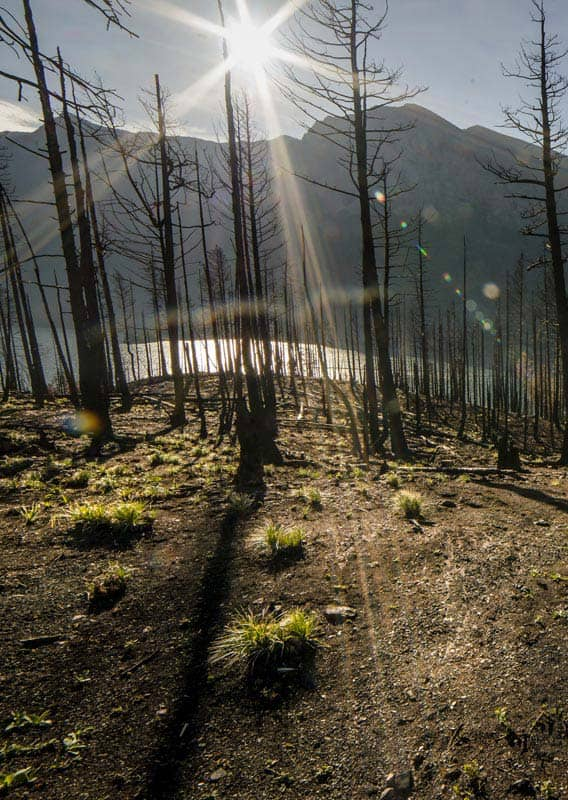 The sun shines through burnt trees above a blue lake