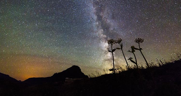 The stars of the Milky Way shine brightly behind silhouettes of flowers.