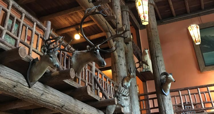 Animal trophies adorn a wooden lodge lounge.