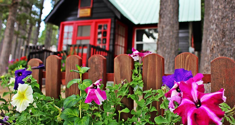A colorful flowerbed in front of a wooden fence and cabin.