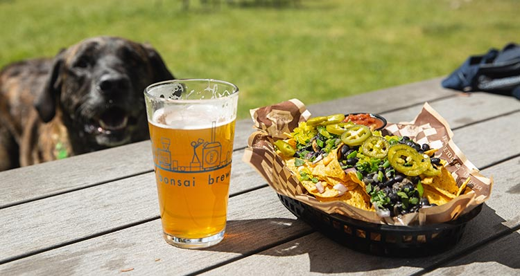 A pint glass of beer and a plate of nachos on a picnic table.