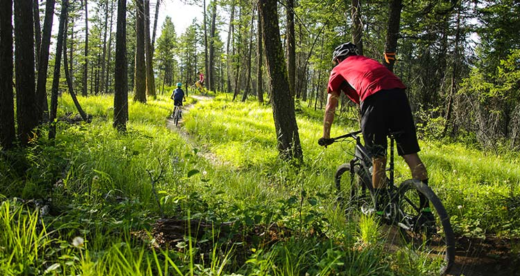 A group of mountain bikers on a narrow trail between trees.