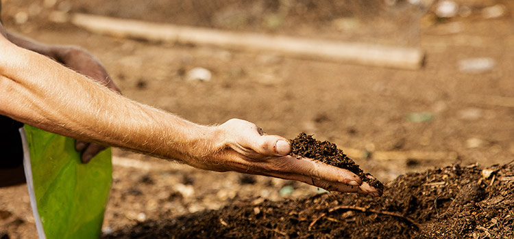 a person holds a handful of compost